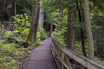The Hemlock Trail