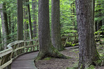 The Hemlock Trail