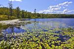 Lake Lacawac