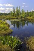 Lehigh Pond Quaking Bog