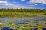 Freshwater Pond Littoral Habitat
