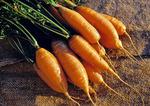 """Carrot, """"Touchon"""", Daucus carota"""