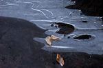 Ice Sheet on Choke Creek