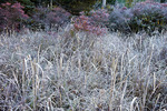 Morning Frost in wetland