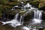 Alder Marsh Brook