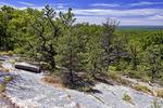 Stunted Pitch Pine on the Kittatinny Ridge