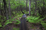 Boardwalk Trail Through A Spruce Swamp
