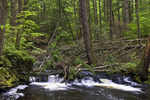 Adams Creek