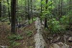 Eastern Hemlock/Red Spruce Forrest