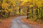 Hypsie Gap Road in Autumn