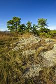 Rattlesnake Mountain on the Appalachian Trail