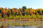 Mufd Pond Boreal Wetland