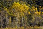 Walpack Valley in Autumn