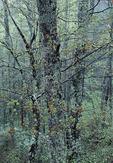 Spring Hardwood Forest in Rain