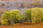 Riparian Zone on the Middle Delaware River