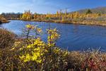Lehigh Pond