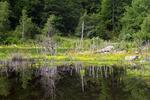 Lake Success Wetland