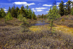 Boreal Wetland in Spring
