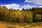 Autumn Forest and Meadow