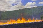 A Prescribed Burn Used to Restore Native Grasslands