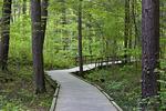 Dingmans Falls Boardwalk Trail