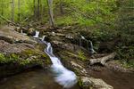 Dunfield Creek