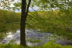 Abandon Beaver Pond Wetland
