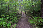 Hearts Content Old Growth Forest