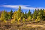 Boreal Wetland in Autumn