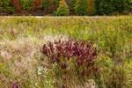 Old Field Meadow in Autumn