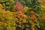 Deciduous Autum Forest