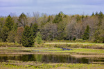 Marsh and Forest in Spring