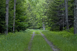 Road Through a Summer Forest