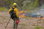 A forest fire specialist starts a backfire for a prescribed burned