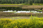 Upper Klondike Pond
