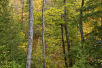Northern Hardwood Forest in Early Autumn