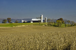 Central Pennsylvania Dairy Farm