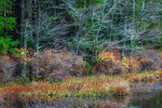 Lake Shoreline Autumn Vegetation