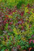 Wild Meadow in Autumn