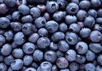 Blueberry StillLife