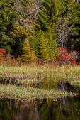 Beaver Pond Wetland
