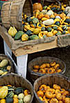 Squash varieties at country market
