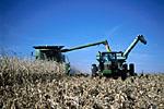 Combine harvesting corn, transferring to grain cart