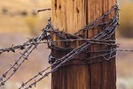 Barbed wire on fence post, rustic corral