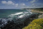 Pacific coast and spring flowers