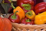 Organic bell peppers in basket at farmers market; October 2009, Nevada City California