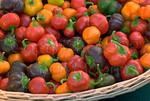 Organic tomatoes at farmers market; October 2008; Nevada City, California