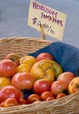 Organic heirloom tomatoes at farmers market; October 2009, Nevada City California
