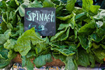 Organic spinach at farmers market; October 2009, Nevada City California