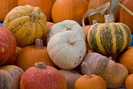 Pumpkins and squash at farmers market; October 2009, Nevada City California